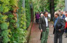 Lärmschutzwand im Garten: von Gabionen bis zur bepflanzten Fassade