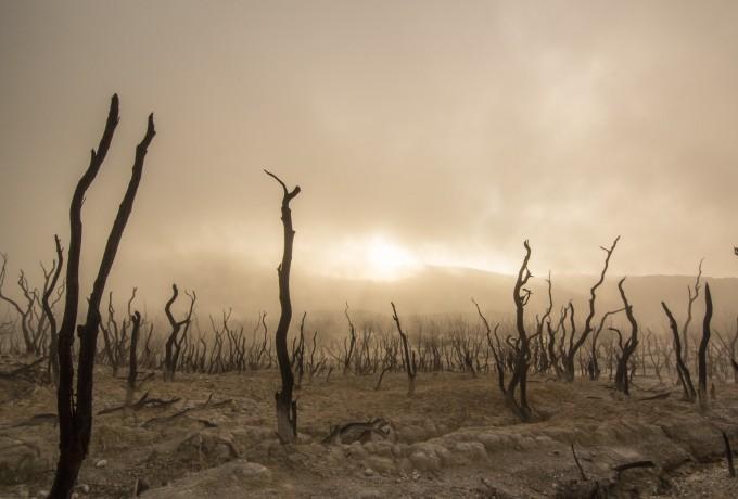 Ist der Umweltschutz Schuld an der Erderwärmung?