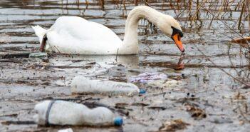 Wasserverschmutzung: Folgen und was dagegen getan wird ( Foto: Shutterstock- Nenad Nedomacki )