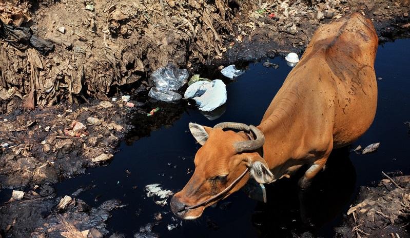 Die Folgen der Wasserverschmutzung sind bereits seit Jahren bekannt, doch allzu lange wurden die Augen davor verschlossen.  ( Foto: Shutterstock- Dewi Putra)